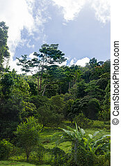 Lush vegetation in the jungle of Mount Pelee, the volcano of Martinique