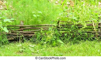 Lush vegetation - Neglected wicker garden with lush...