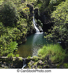 Waterfall surrounded by lush green vegetation in Maui, Hawaii.