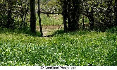 Lush weeds in wind,grassland,fence