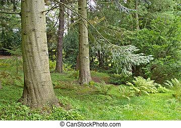 Pine tree in a lush underbrush wood, botanical garden, Gothenburg, Sweden