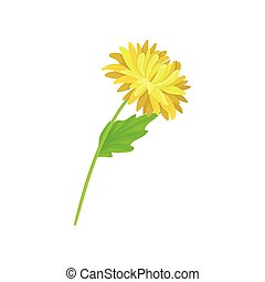 Lush yellow flower on a thin stalk. Vector illustration on white background.