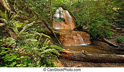 lussureggiante, foresta pioggia, cascata, e, ferns:, dorato, cascata, cadute, in, grande, bacino, parco stato, california