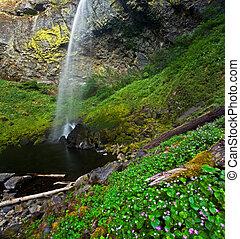 lussureggiante, idilliaco, foresta pioggia, cascata