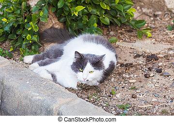lusta, fogalom, -, háj macska, utca, hájasság, fehér