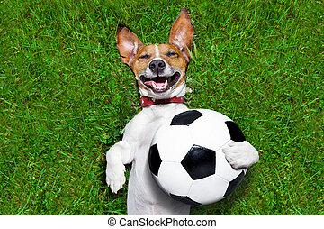 lustiges, fussball, hund