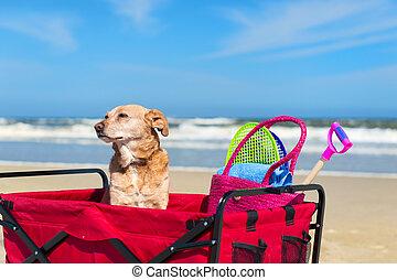 lustiges, hund, urlaub