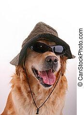 lustiges, hund, verkleidet
