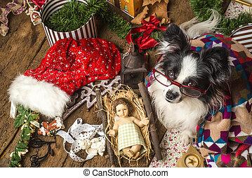 lustiges, hund, weihnachtskarte