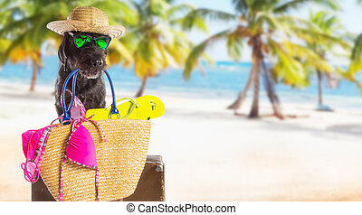 lustiges, sommer, schwarzer hund, mit, sommer, accessories.