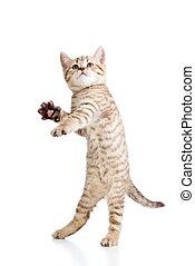 lustiges, verspielt, katz, gleichfalls, jumping., freigestellt, weiß, hintergrund