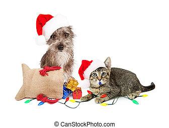 lustiges b ser weihnachten santa hund tragen. Black Bedroom Furniture Sets. Home Design Ideas