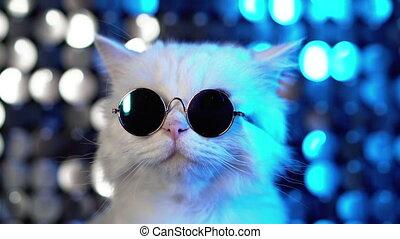 lustrzany, błękitny, dyskoteka, okulary, portret, neon,...