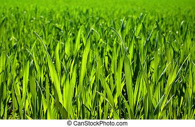 luxuriant, herbe, closeup