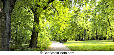luxuriante, floresta