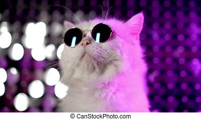 Luxurious domestic kitty in glasses poses on purple...