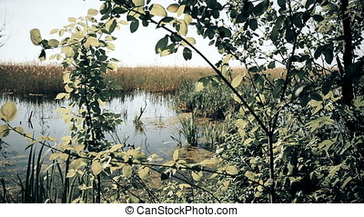 Luxurious Vegetation of Marsh at Twilight - Luxurious...