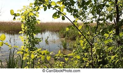 Luxurious Vegetation of Marsh at Twilight - Luxurious...