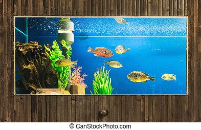 luxury aquarium