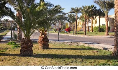 Luxury hotel with palm trees blowing in the wind.