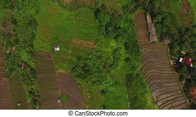 Luxury villa in Bali and rice fields aerial