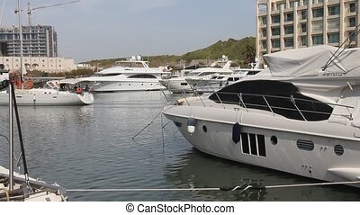 Luxury yachts in marina