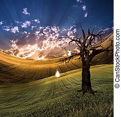luz, árbol