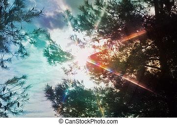luz, através, espectro, árvores, pinho