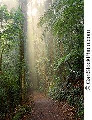 luz, bosque, lluvia