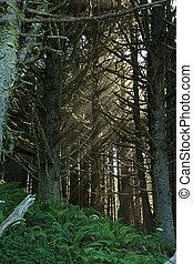 luz, bosque