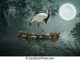 luz de la luna, pájaro