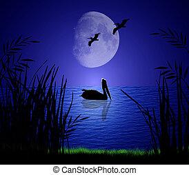 luz de la luna, pelícanos
