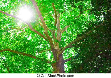luz del sol, en, árbol