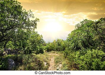luz del sol, en, montaña, bosque