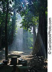 luz del sol, naturaleza