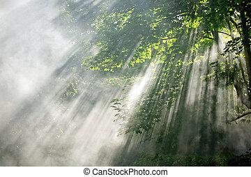 luz del sol, vigas, en, bosque
