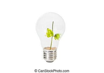 luz, dentro, verde, ramo, bulbo
