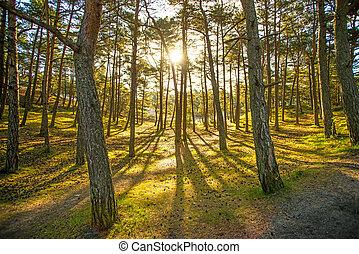 luz, espalda, bosque