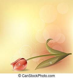 luz, fondo pastel, con, rosa, tulipán