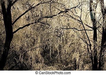 luz inverno, -, ensolarado, árvores, day., gelado, gelado