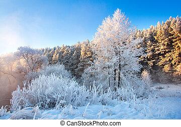 luz solar, árvores inverno, manhã, gelado, paisagem