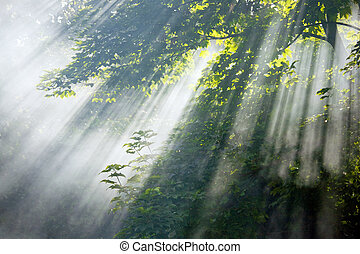 luz solar, vigas, em, floresta