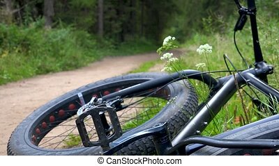 Lying bicycle on the road in forest - Video of lying bicycle...