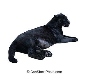 lying black panthera. Isolated  over white