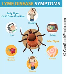 Lyme disease symptoms information infographic illustration