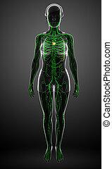 Lymphatic system of female body - Illustration of female ...