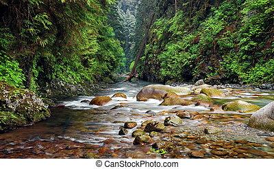 Lynn Canyon Creek - Creek in Lynn Canyon Park North...