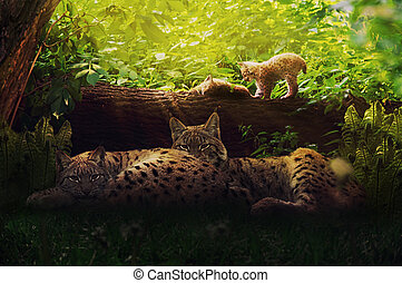 Lynx family in the forest