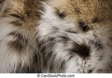 Lynx Fur Background