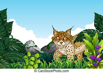 Lynx living in the forest